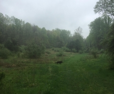 30 beautiful wooded acres with some fields.