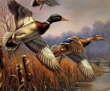 2020 Prime Duck Hunting Lease and Camp