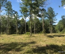 142 ac - Timberland   Hunting Tract - PRICE REDUCED