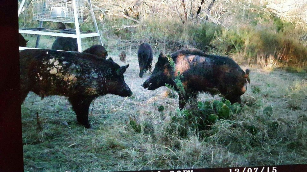 Fredericksburg, TX - Year Round Hunting Lease featured image