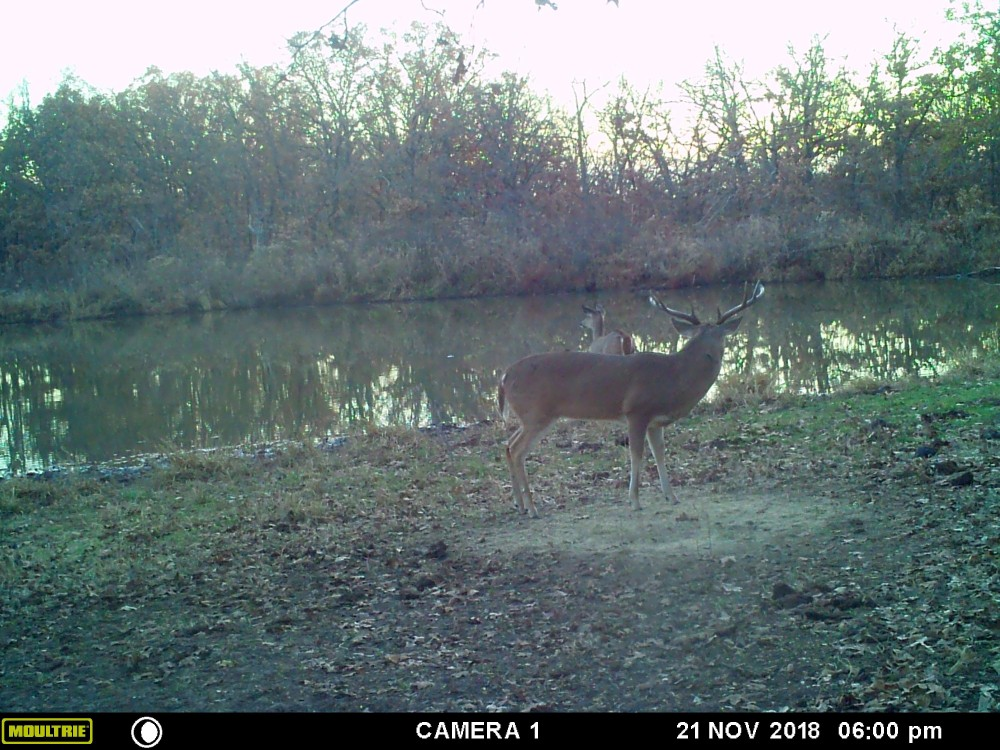 Updated: 6700 Acres of Prime Osage County Hunting - Long Term Lease w/House- Deer, Quail, Turkey, Wa featured image
