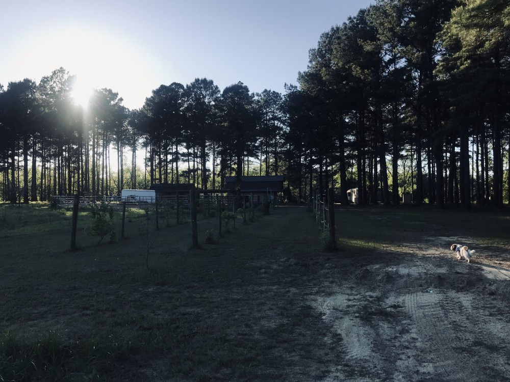 Long Leaf Pine Forests bordering Little Satilla River, 495 acres, passes, to  2, 4 acre ponds. featured image