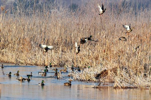 DUCK HUNTING / LEASING - $175 featured image