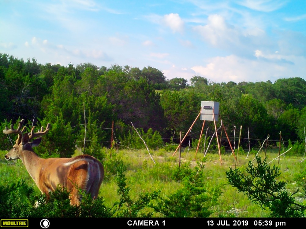 700 acre high fence ranch with several ponds and streams (weekend hunts/ day hunts) featured image