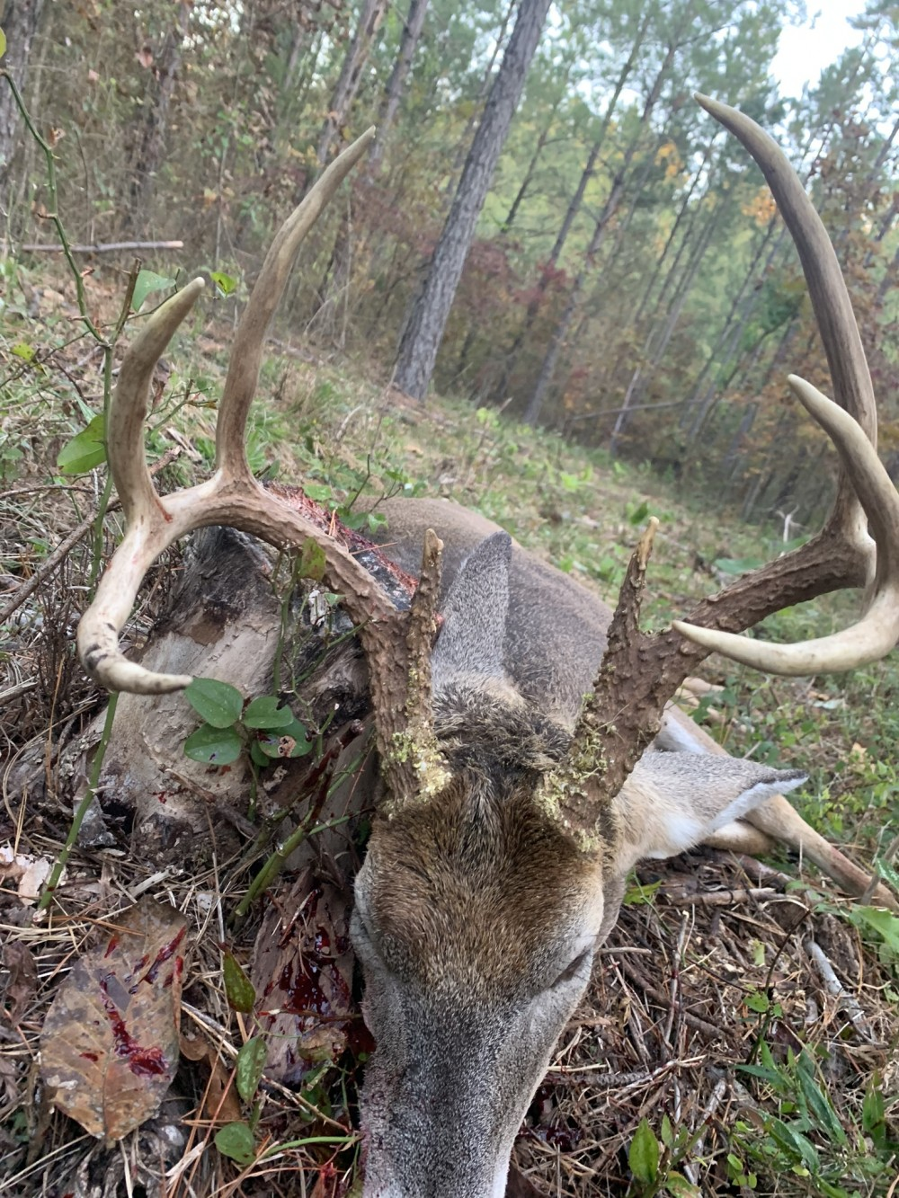 5000 acre deer lease in Perry county Arkansas featured image