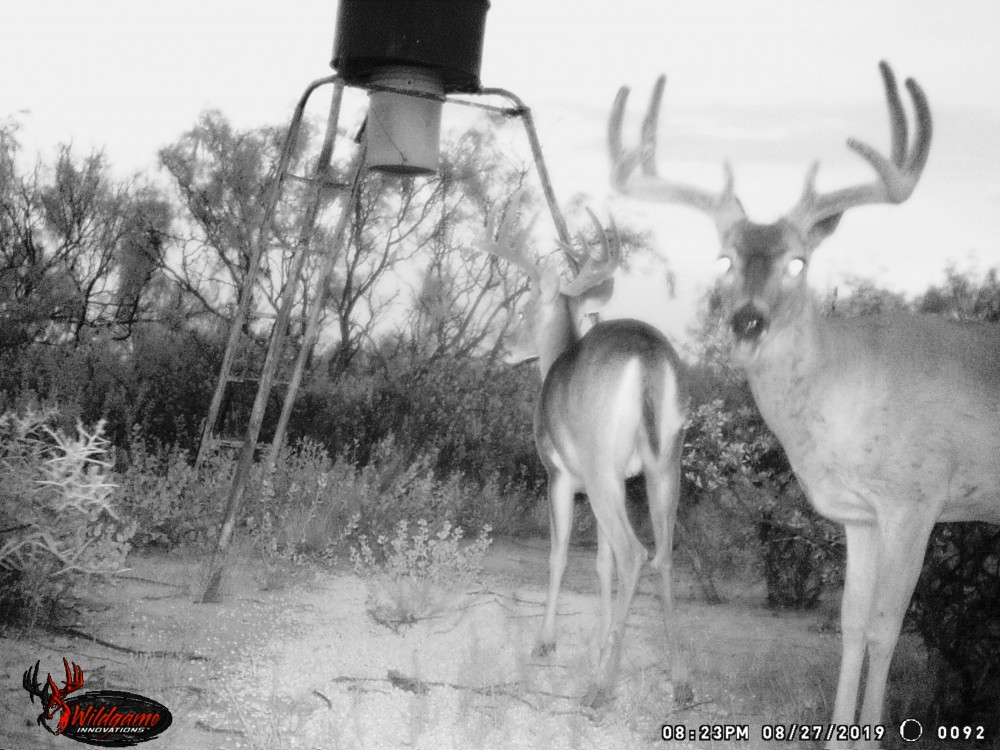 Year round hunting lease Big Lake, Texas featured image