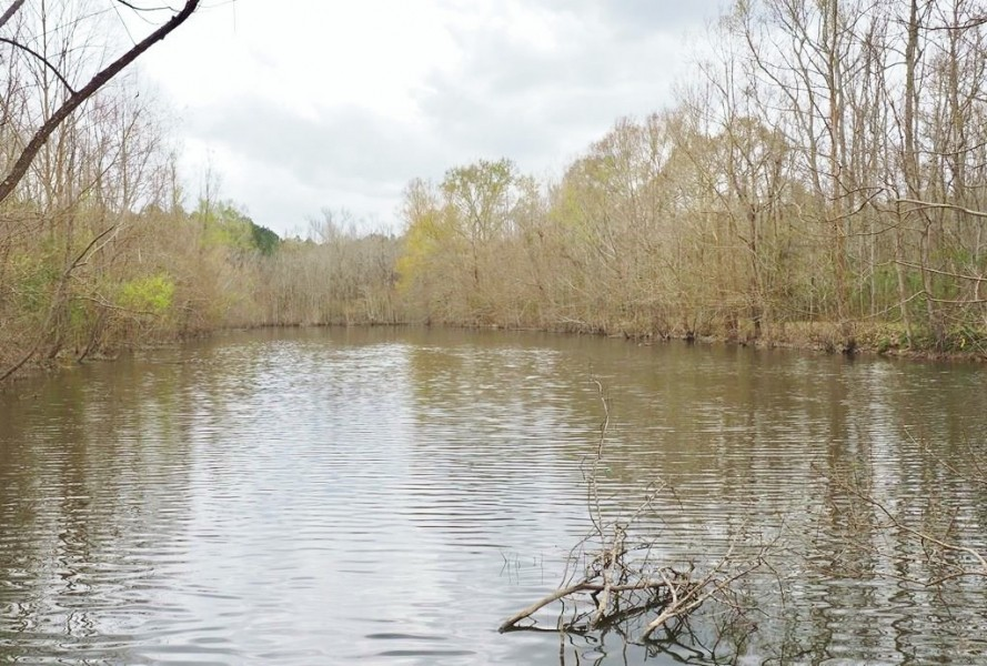 105 Acres Land for Sale  Pasture  Cattle Farm  Hunting SW MS featured image