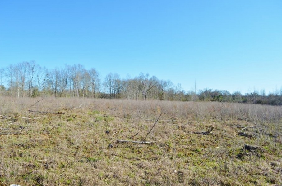 23.48 Acres Vacant Land for sale in Lincoln County MS featured image