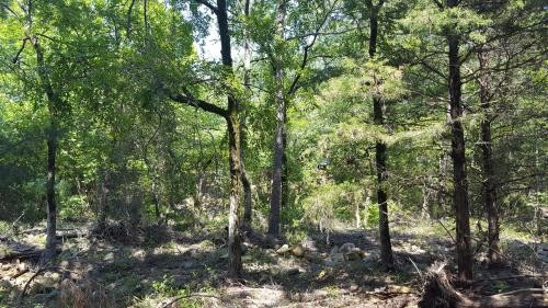 Kiamichi Wilderness Land for Sale featured image