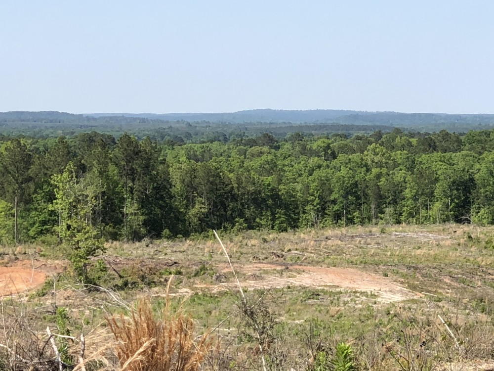2735 Acres Rolling Piney Woods featured image