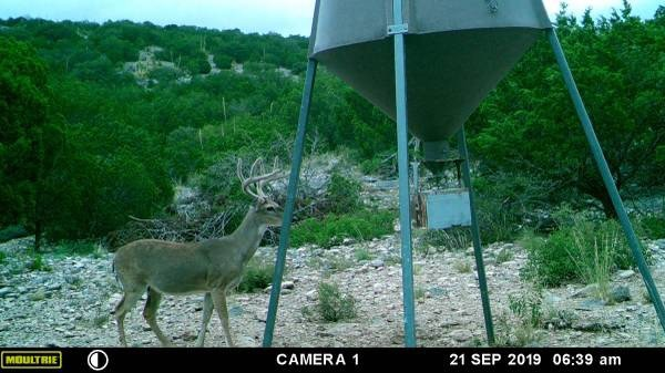 12,000 acre West Texas hunting ranch featured image