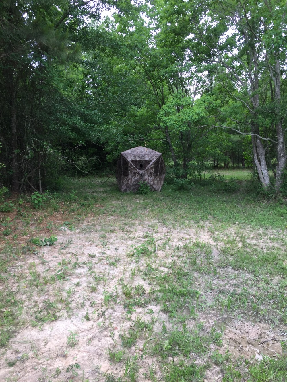 Day and Night Hunts 20 minutes from Houston featured image