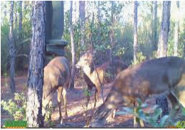 Prime Deer Hunting 766 Acres in Taylor County, FL featured image