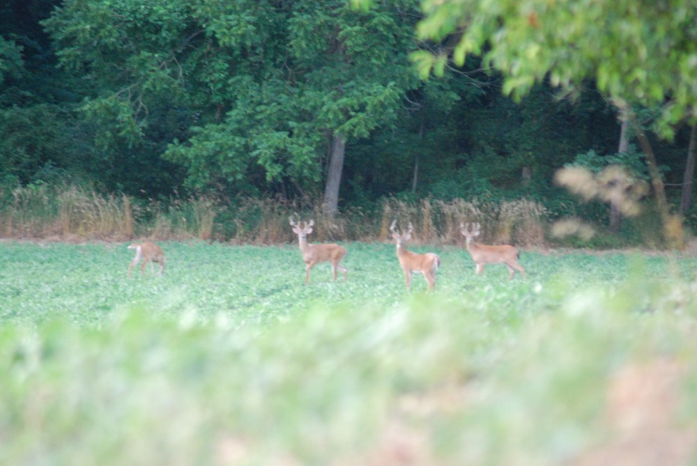 HUNTING LAND AVAILABLE FOR SHORT TERM LEASE DURING OHIO WHITE-TAIL DEER SEASONS featured image