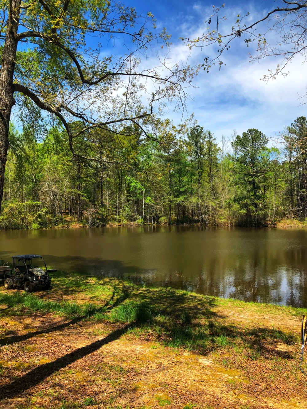 220 acre Timber Farm featured image