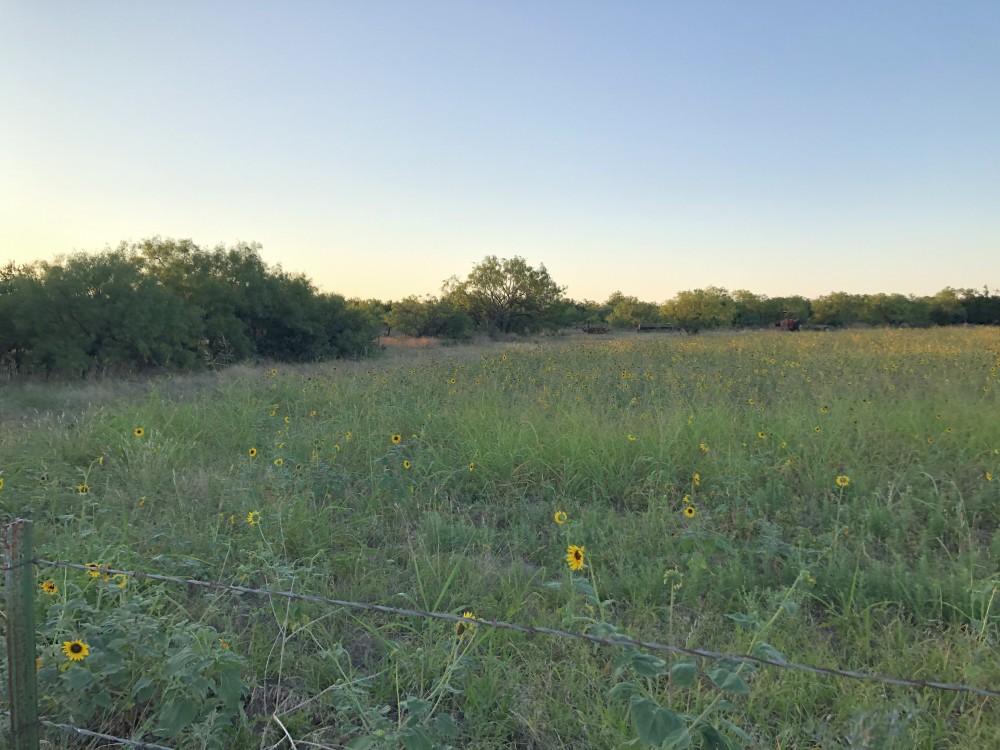 Dove Lease near Abilene - Sunflowers and Tanks featured image