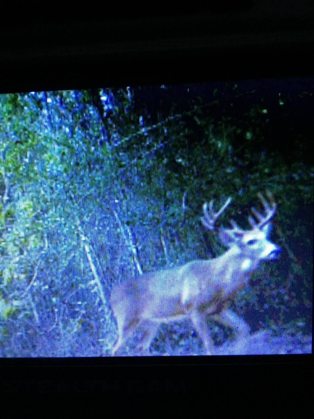 Day Hunts 20 minutes From Houston for $60.00 featured image