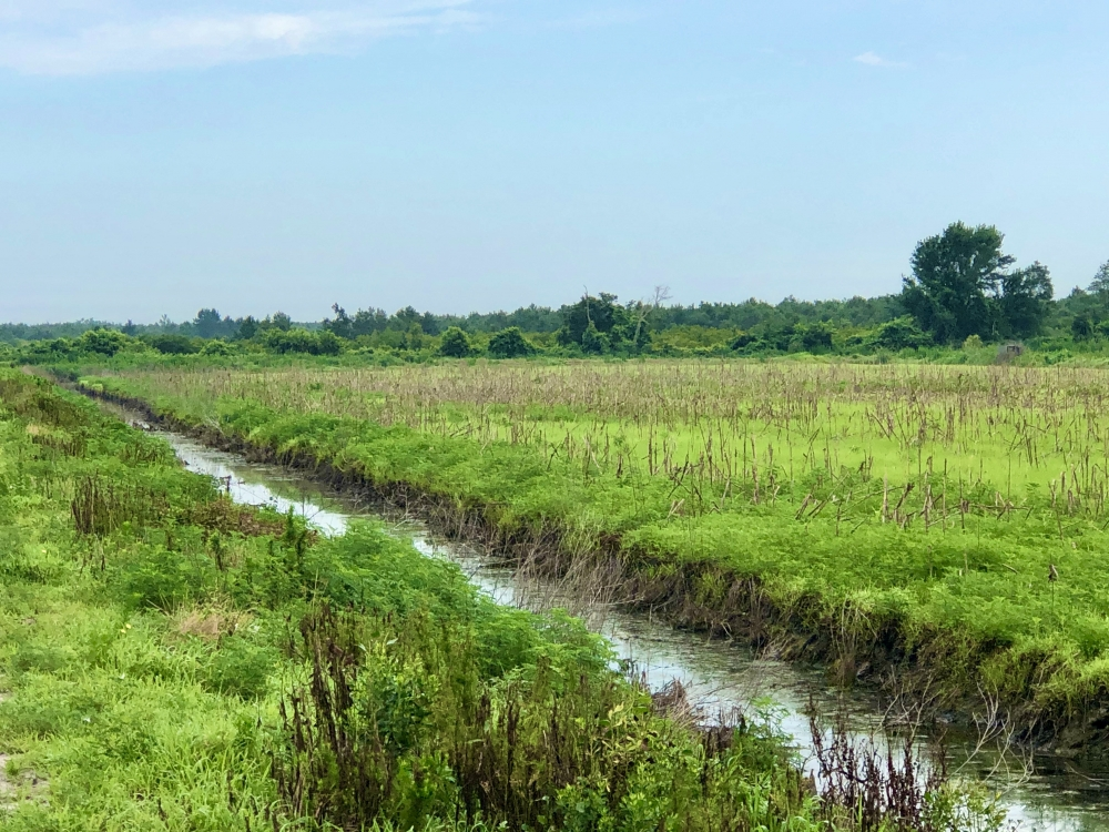 Duck Impoundment for sale in Hyde County NC featured image