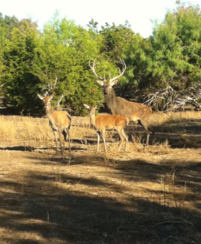 Aprox 550 acres up for deer lease in Scurry Co featured image