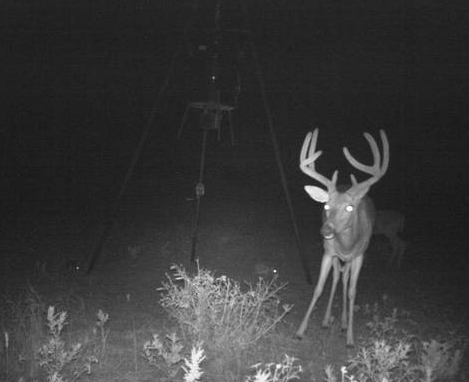 Beautiful Deer Hunting Ranch 650 Acres in San Angelo, TX featured image