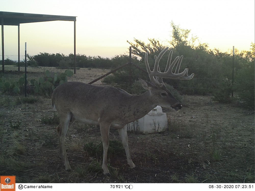 Northern Maverick County Trophy lease featured image
