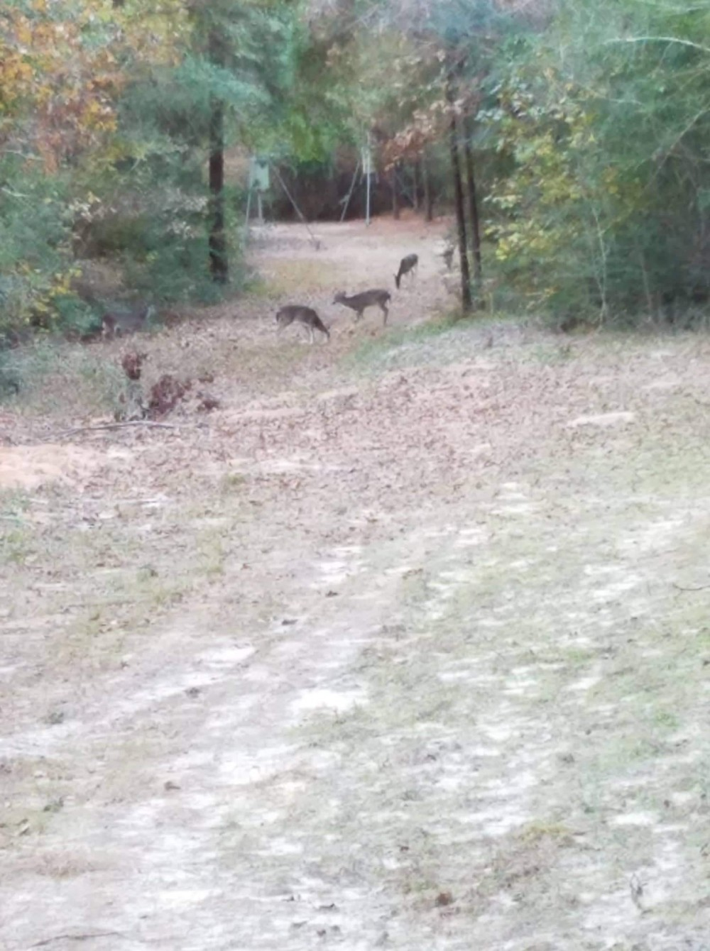 East Texas Newton county deer lease featured image