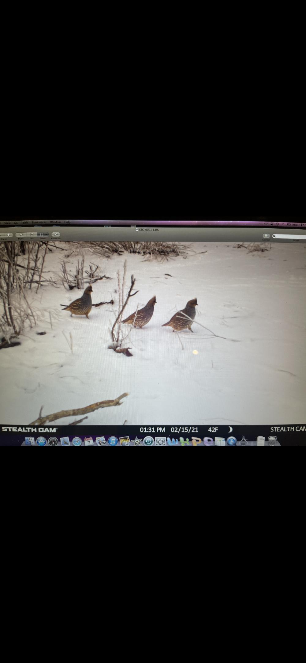 Deer, quail and predators featured image
