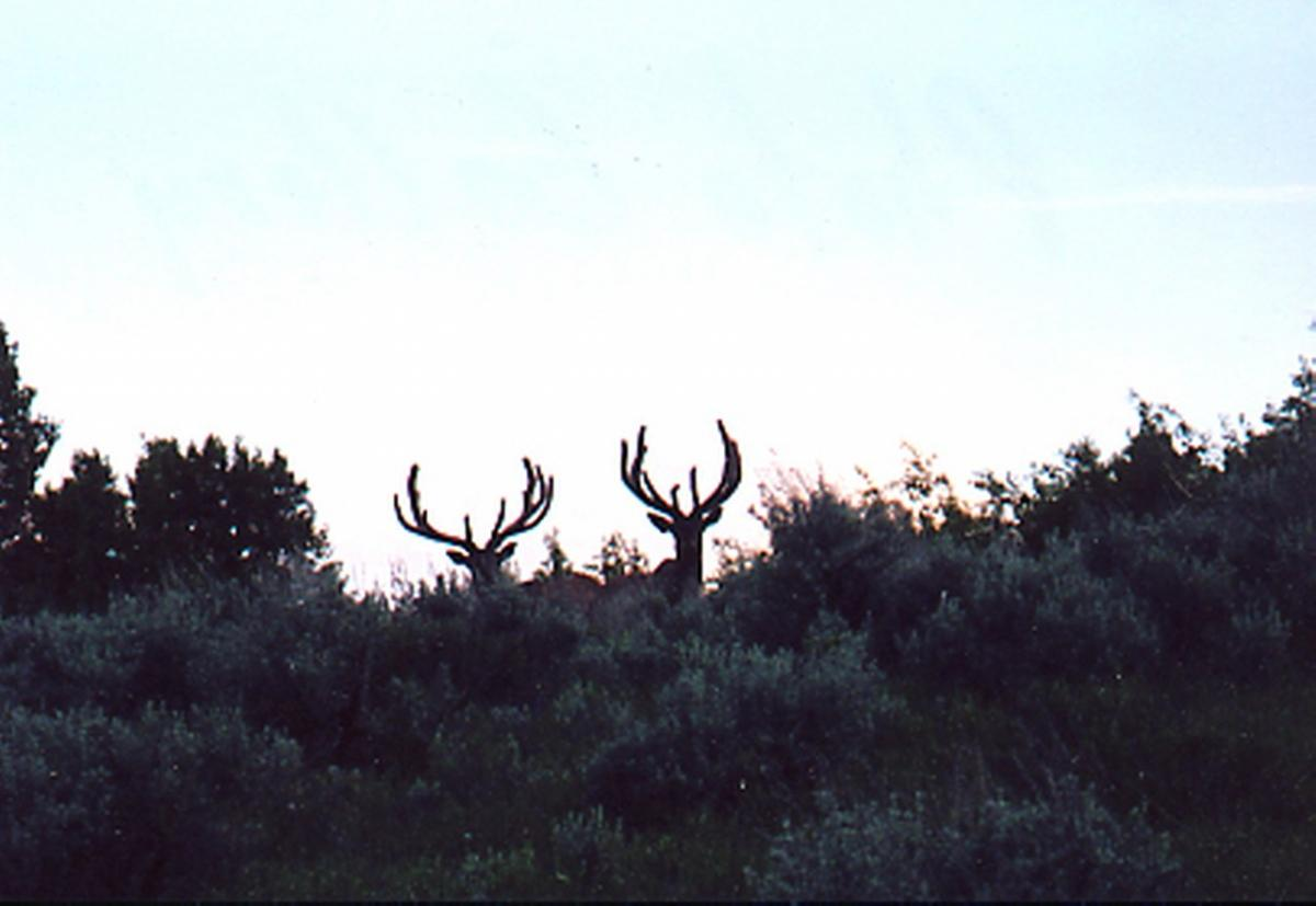 1,163 Acre Mesa Ranch Elk and Deer Hunting Land in Montrose, CO