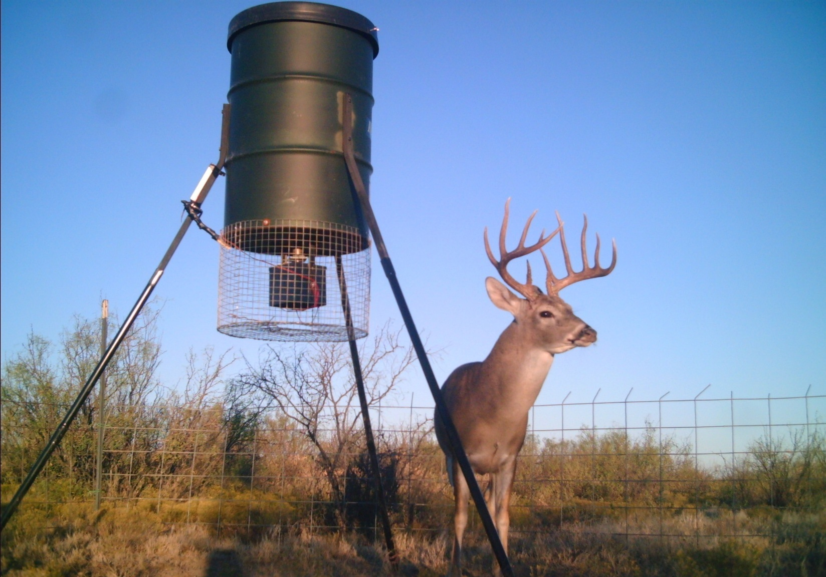 SOLD - Mule Deer and Whitetail in Reagan, Texas - Hunting ...